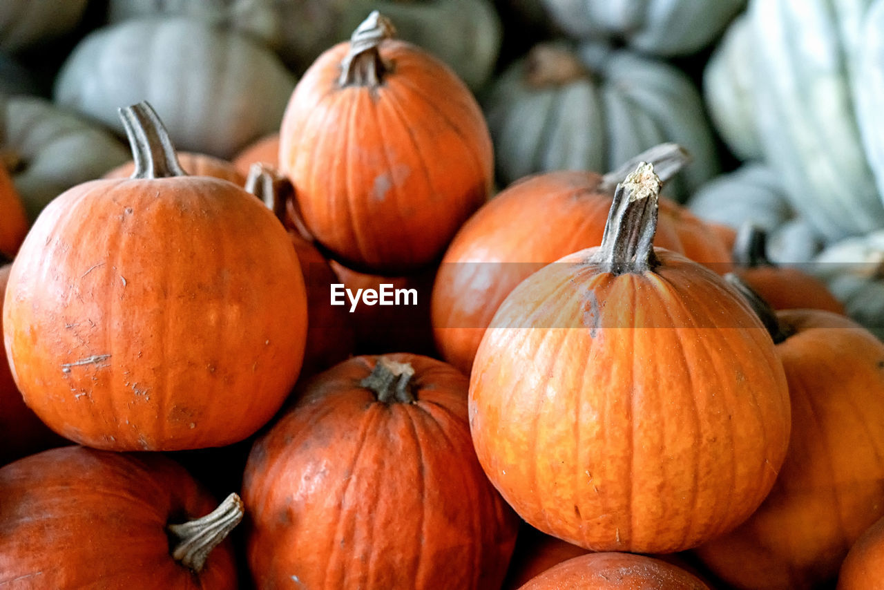 food and drink, food, pumpkin, vegetable, healthy eating, freshness, orange color, wellbeing, no people, close-up, large group of objects, focus on foreground, market, still life, day, autumn, for sale, raw food, abundance, retail, retail display, ripe