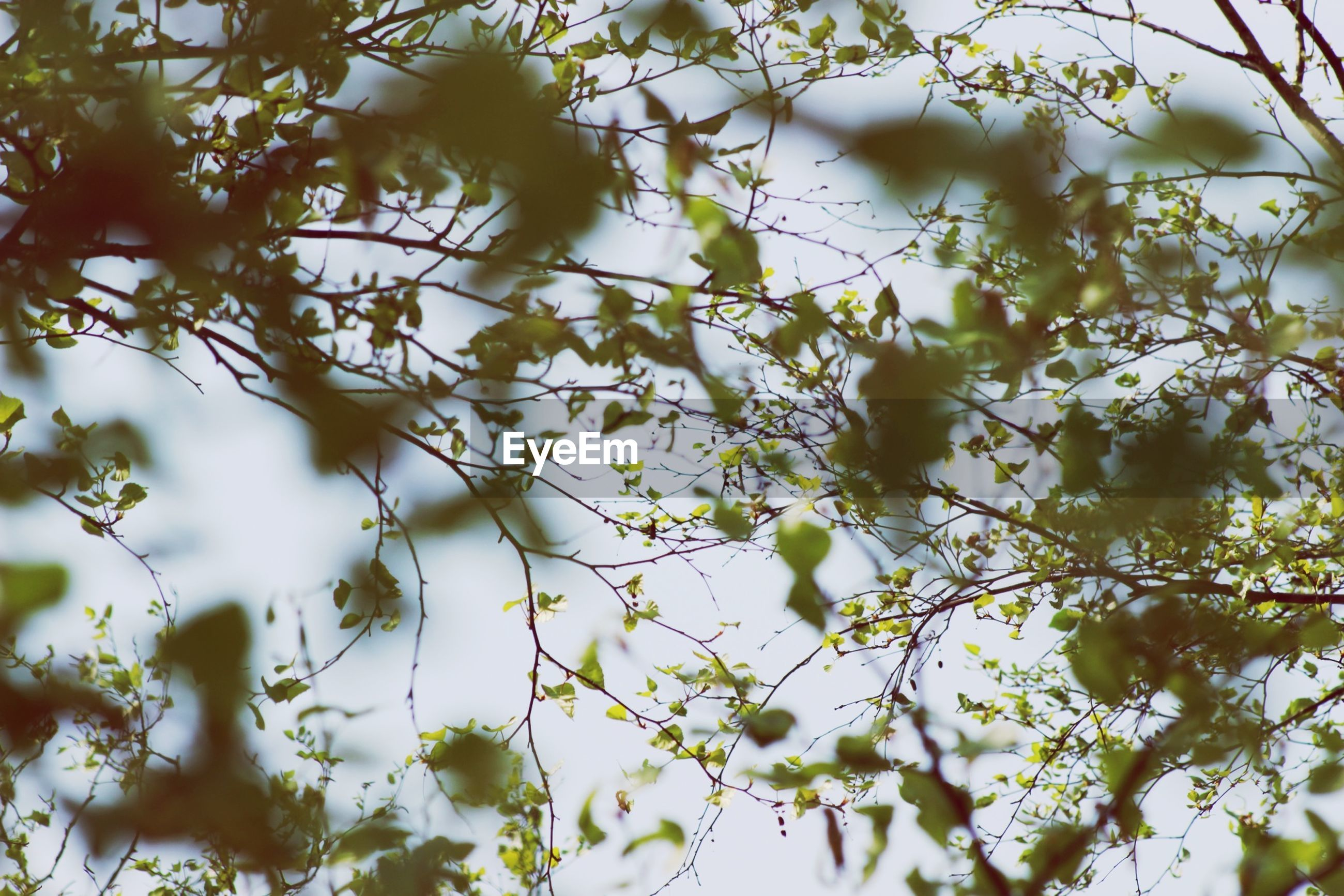 branch, growth, low angle view, tree, nature, flower, beauty in nature, animal themes, one animal, white color, focus on foreground, day, outdoors, close-up, leaf, freshness, plant, no people, twig, fragility