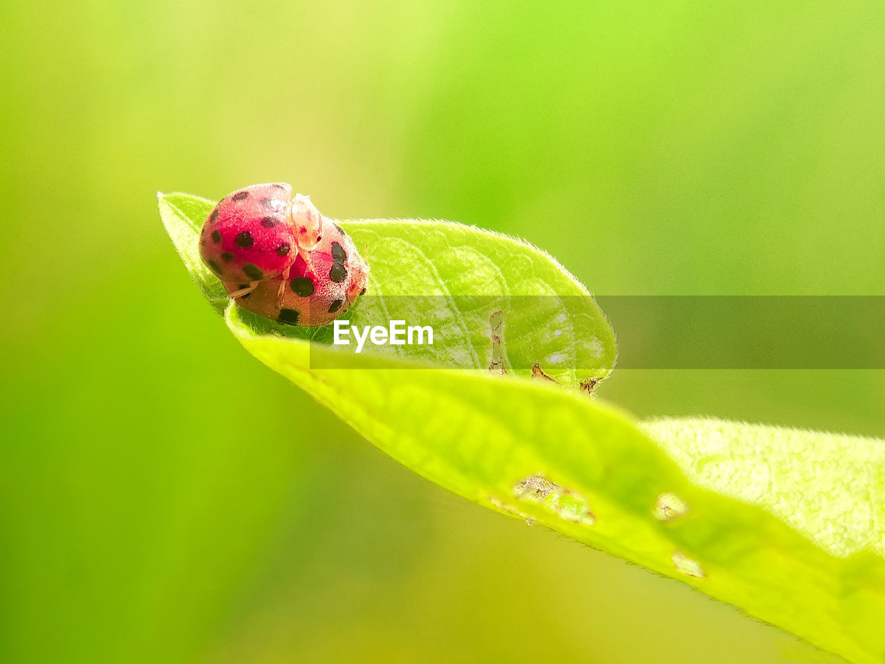 green color, plant part, close-up, animal wildlife, leaf, plant, animals in the wild, animal themes, invertebrate, insect, one animal, animal, nature, no people, beauty in nature, growth, focus on foreground, day, selective focus, vulnerability, outdoors