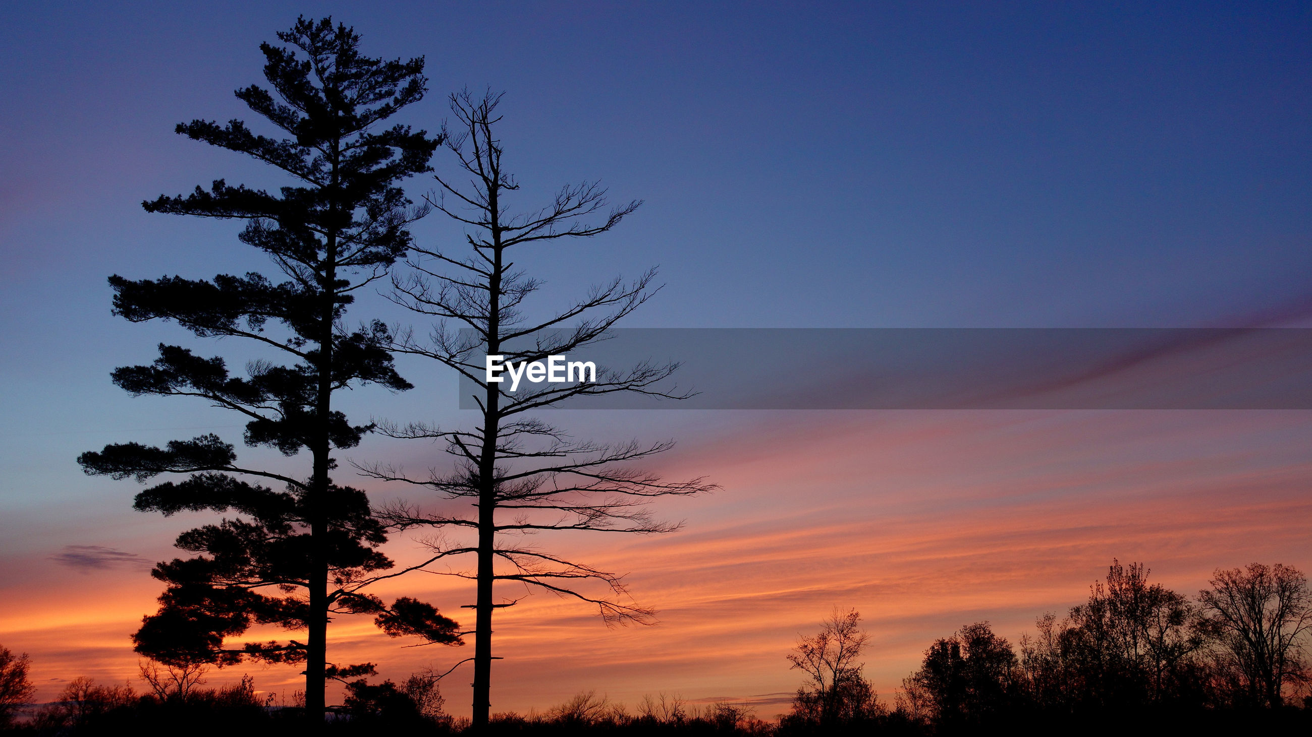 LOW ANGLE VIEW OF SILHOUETTE TREE AT SUNSET