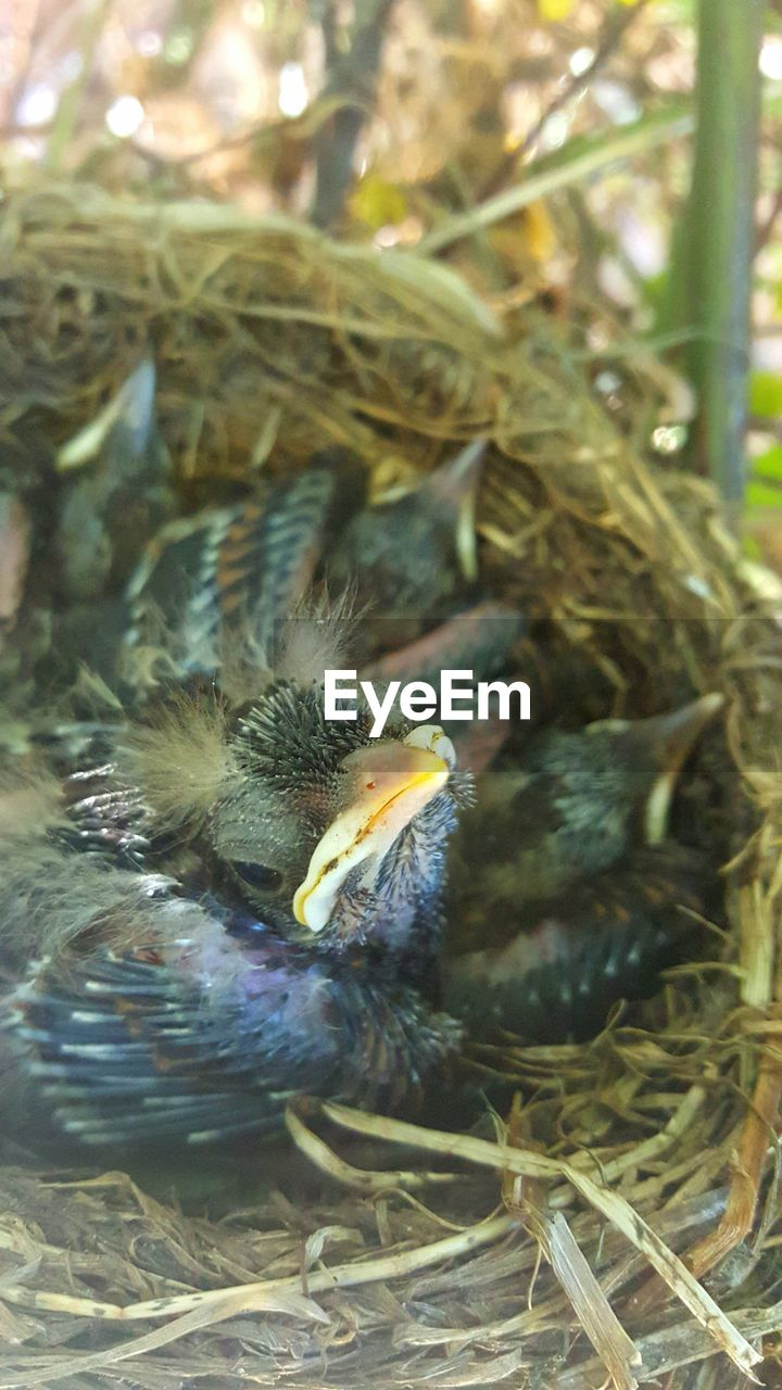 bird, young bird, animal themes, animals in the wild, young animal, nature, bird nest, high angle view, no people, day, new life, animal wildlife, close-up, beak, outdoors