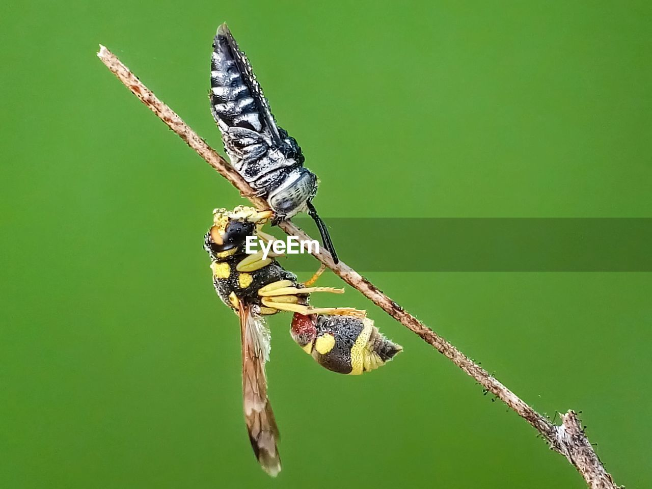 insect, invertebrate, animal wildlife, animals in the wild, animal themes, animal, one animal, animal wing, focus on foreground, plant, close-up, nature, beauty in nature, no people, day, twig, outdoors, butterfly - insect