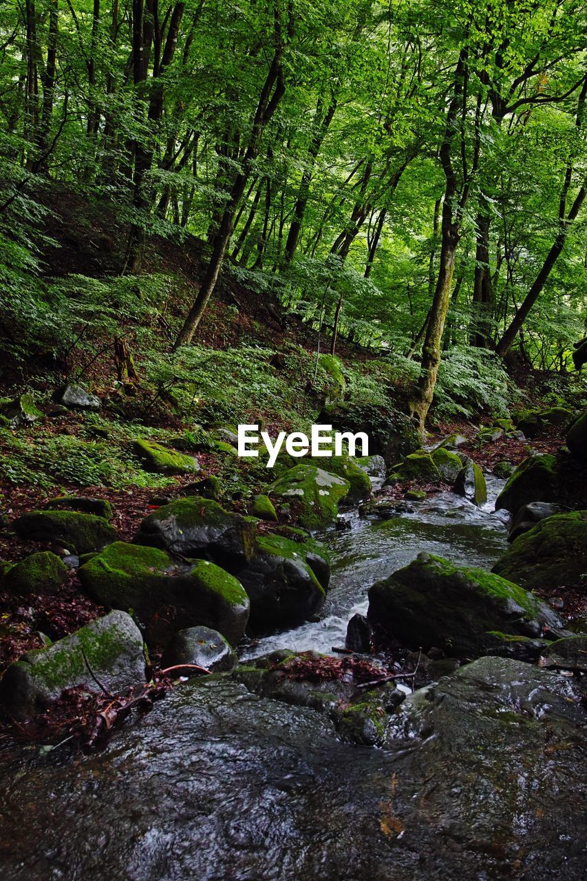 forest, tree, plant, land, water, beauty in nature, nature, tranquility, rock, scenics - nature, no people, tranquil scene, solid, rock - object, day, woodland, growth, flowing water, green color, flowing, outdoors, stream - flowing water, rainforest