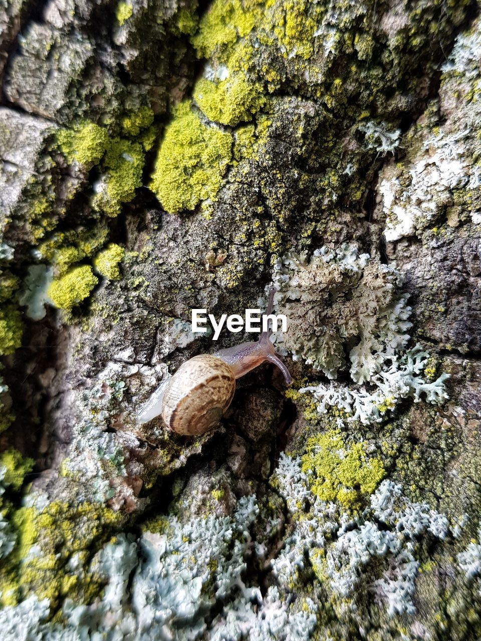 one animal, moss, rock - object, tree trunk, nature, animal themes, textured, day, animals in the wild, tree, no people, outdoors, rough, animal wildlife, high angle view, close-up, lichen, slug, beauty in nature, fungus, fragility