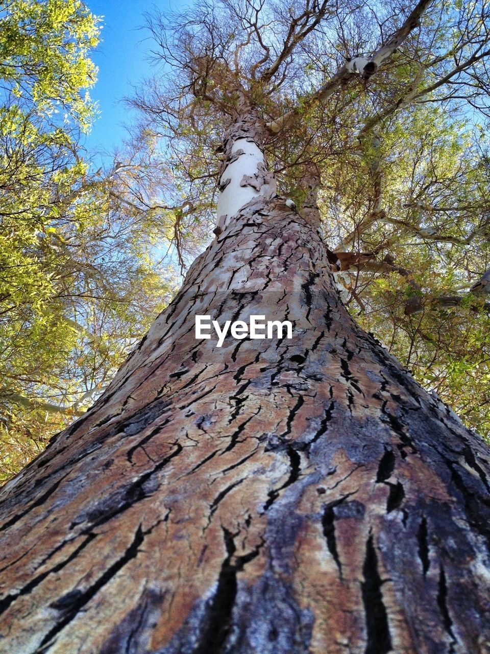 tree trunk, tree, nature, day, outdoors, no people, bark, forest, growth, low angle view, tranquility, beauty in nature, branch, close-up