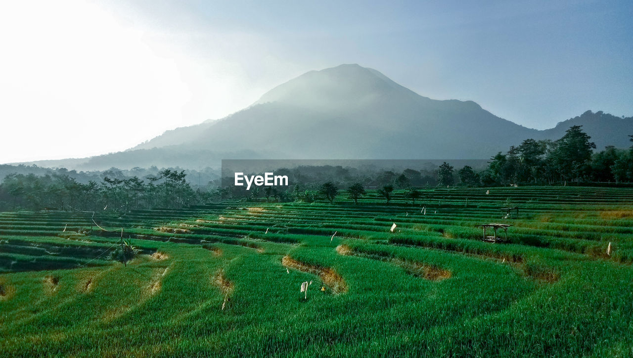 landscape, environment, mountain, sky, field, scenics - nature, agriculture, land, plant, beauty in nature, tranquil scene, rural scene, fog, nature, farm, tranquility, no people, day, mountain range, growth, outdoors, plantation