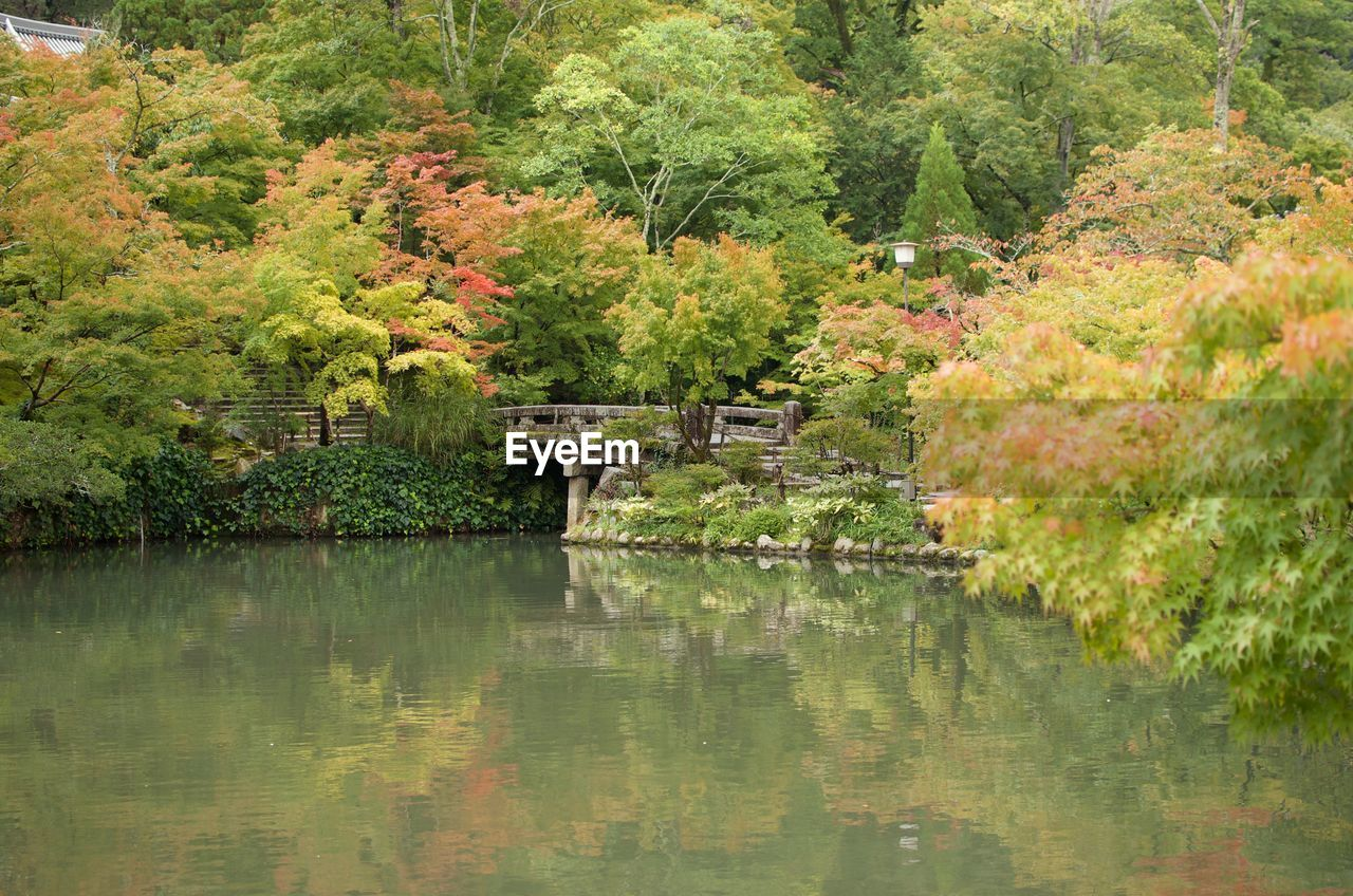 tree, reflection, water, lake, plant, nature, tranquility, no people, autumn, beauty in nature, scenics - nature, tranquil scene, green color, day, bridge, outdoors, forest, landscape, foliage, ornamental garden