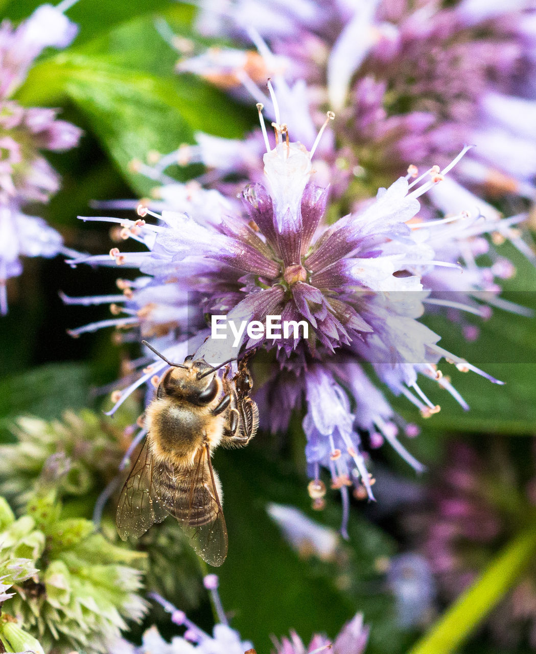 flower, insect, bee, fragility, nature, pollination, growth, animals in the wild, animal themes, one animal, no people, focus on foreground, plant, freshness, beauty in nature, day, close-up, outdoors, flower head, buzzing