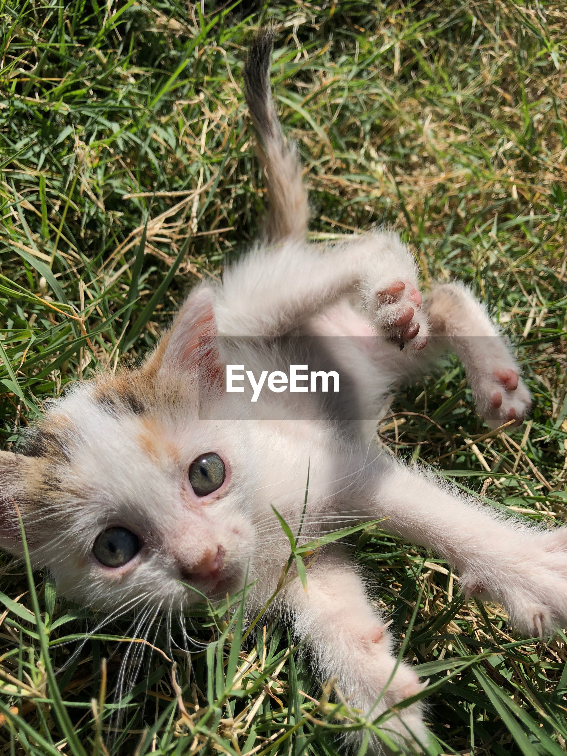 High angle view portrait of kitten on grass