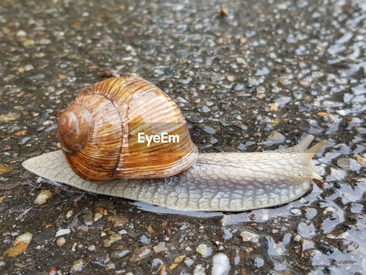animal, animal wildlife, animal themes, shell, one animal, mollusk, animal shell, invertebrate, animals in the wild, gastropod, snail, no people, close-up, nature, day, high angle view, land, outdoors, wet, animal body part, crawling