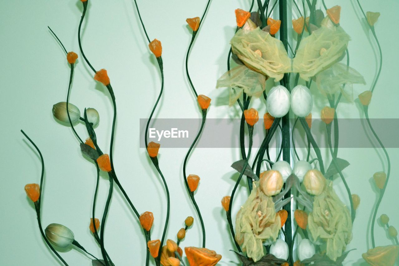 flower, indoors, no people, studio shot, fragility, multi colored, freshness, close-up, flower head, white background, day
