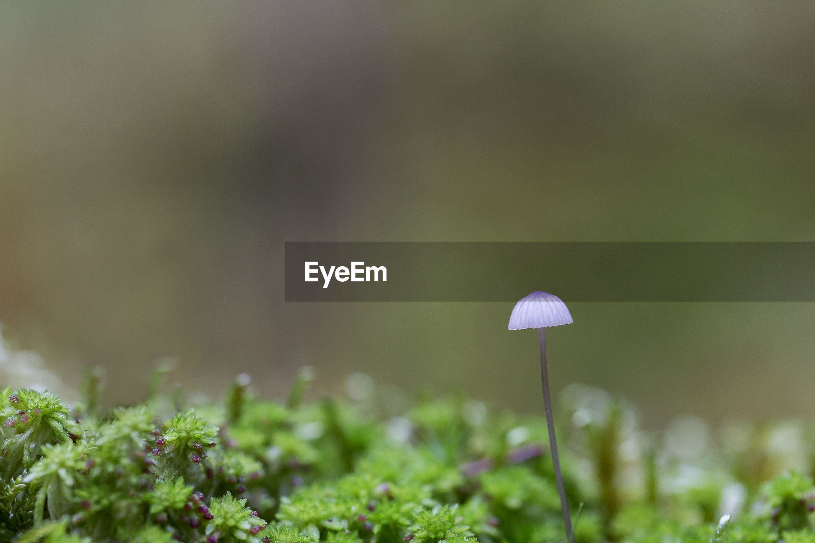 CLOSE-UP OF MUSHROOM GROWING IN PLANT
