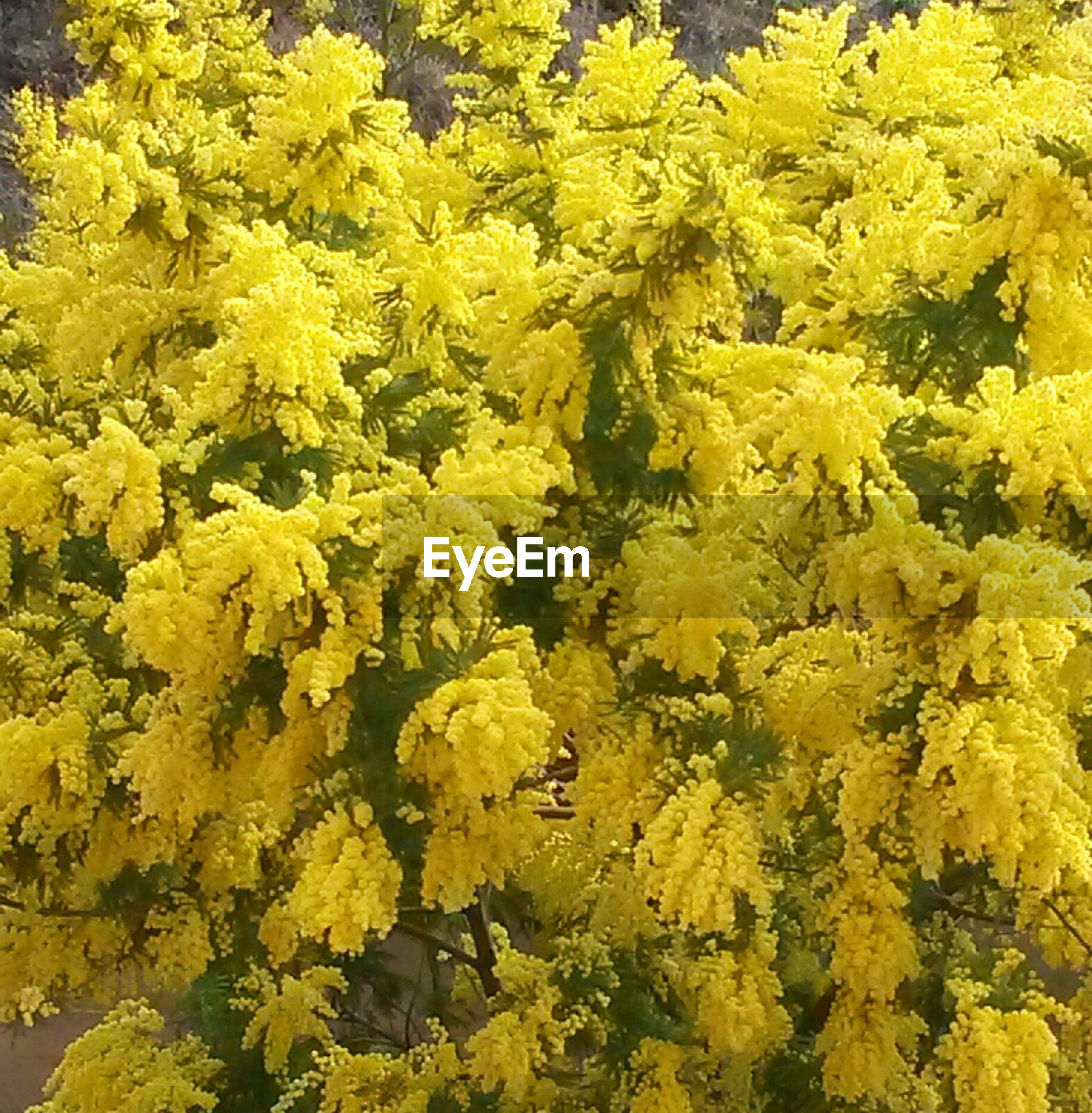 yellow, flower, growth, nature, beauty in nature, fragility, close-up, freshness, no people, full frame, outdoors, backgrounds, flower head, day, yellow color