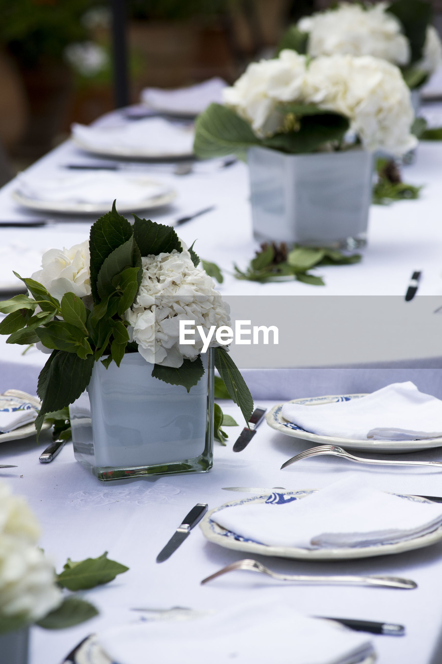 WHITE ROSE ON TABLE IN PLATE