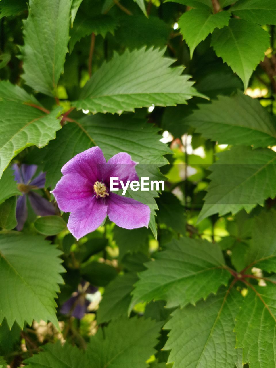 plant, flowering plant, flower, beauty in nature, freshness, growth, plant part, fragility, leaf, vulnerability, petal, flower head, close-up, inflorescence, green color, nature, pink color, no people, day, purple, outdoors