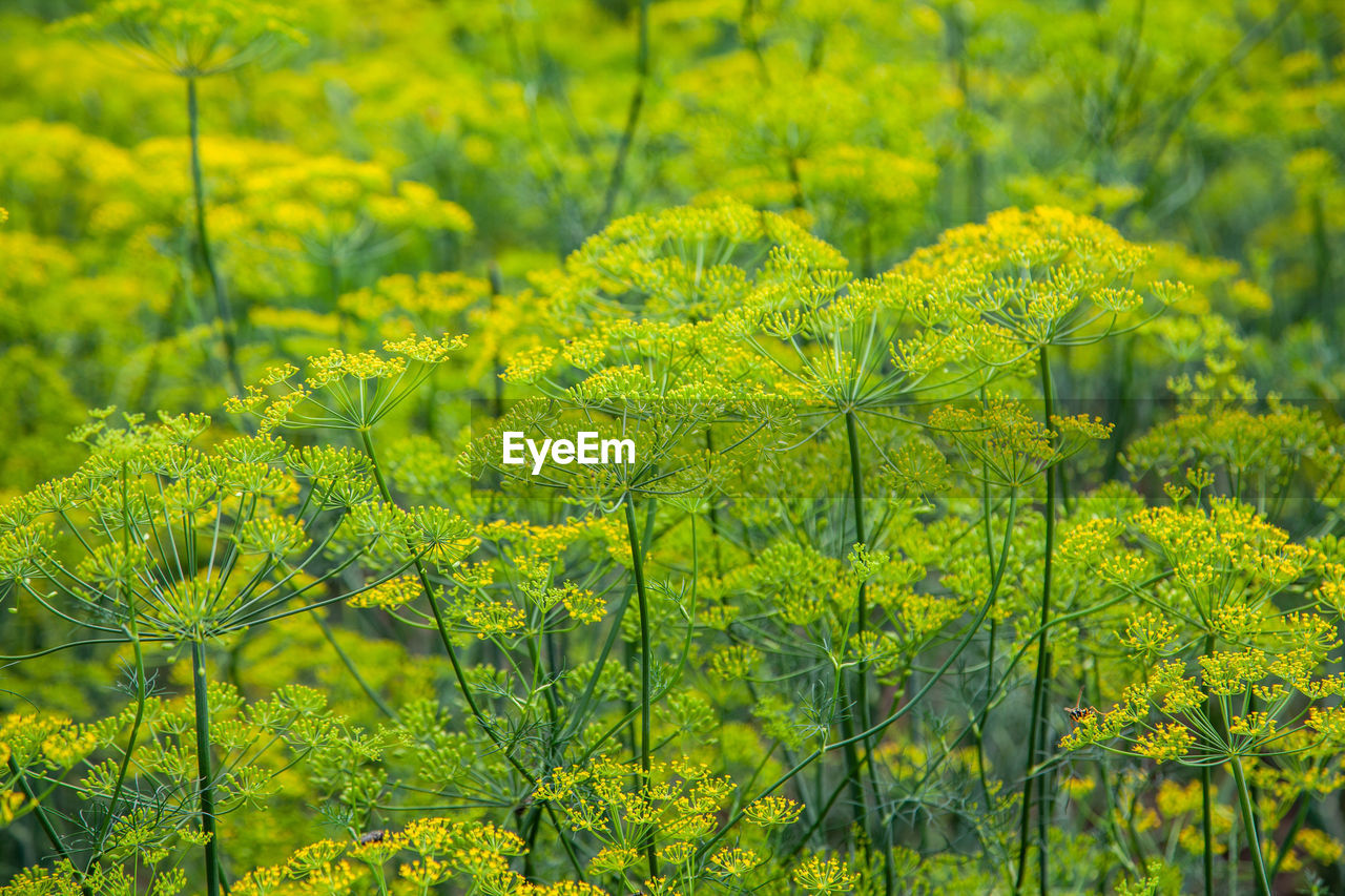 green color, plant, growth, beauty in nature, yellow, no people, nature, land, day, tranquility, close-up, field, tree, freshness, focus on foreground, flower, outdoors, flowering plant, selective focus, foliage