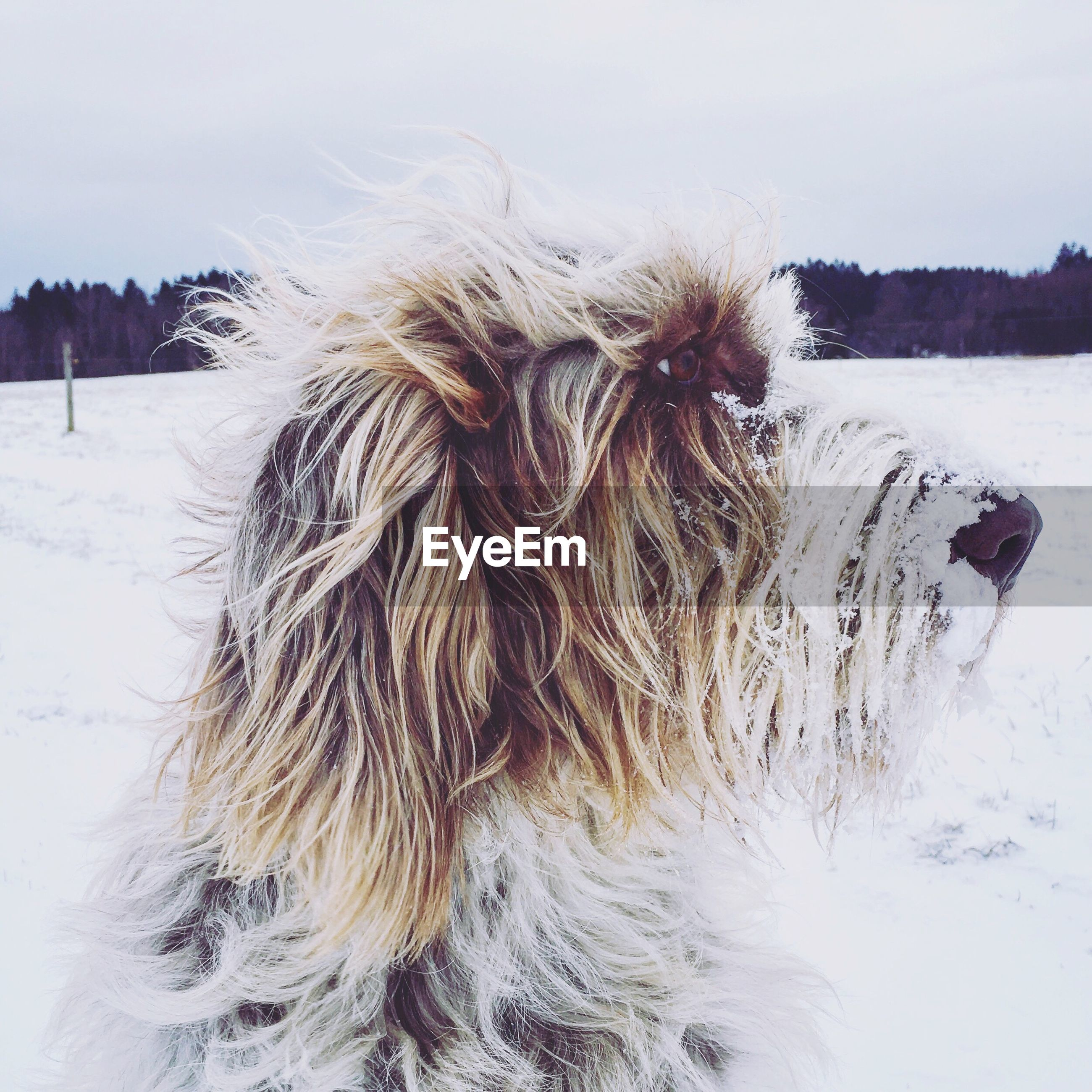 Close-up of dog on snow field against sky