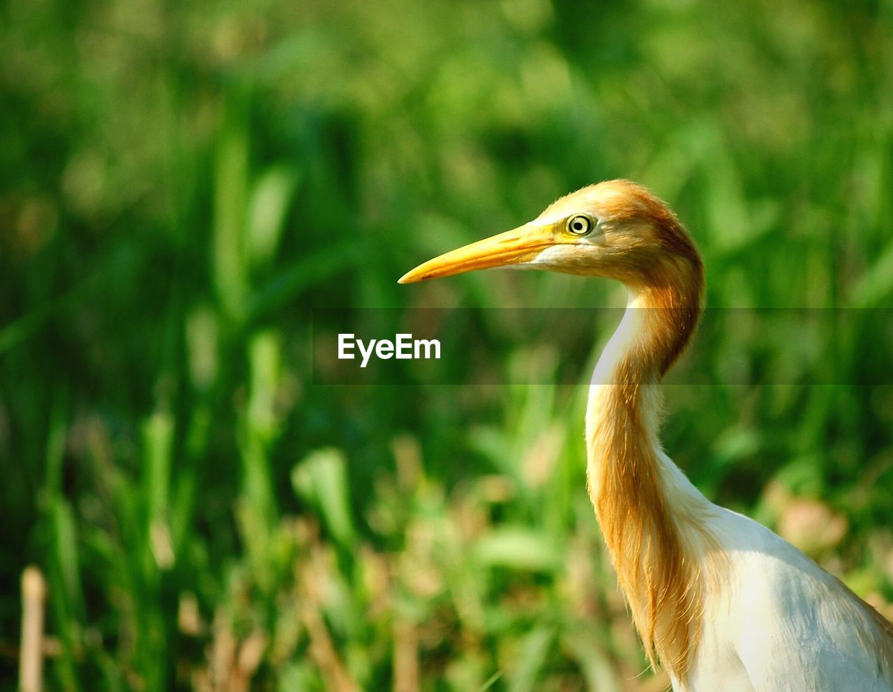one animal, animal themes, animal wildlife, animal, animals in the wild, vertebrate, bird, focus on foreground, no people, nature, beak, day, close-up, heron, outdoors, water bird, side view, land, green color, beauty in nature, animal neck