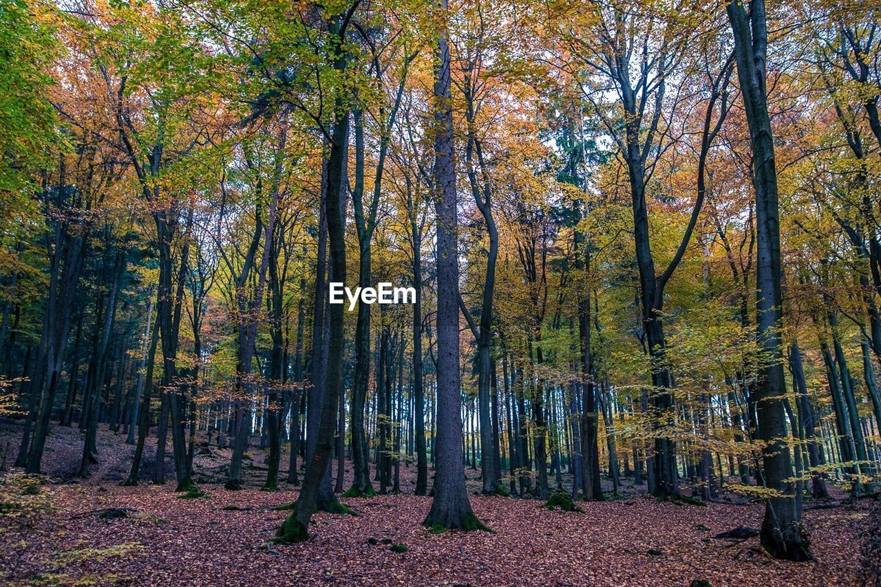 tree, tranquility, nature, tranquil scene, forest, autumn, tree trunk, beauty in nature, scenics, change, outdoors, no people, landscape, growth, day, sky