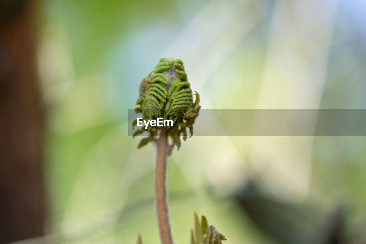 plant, growth, close-up, focus on foreground, beauty in nature, green color, day, no people, nature, flower, plant stem, fragility, tranquility, selective focus, beginnings, vulnerability, outdoors, botany, bud, freshness, coniferous tree, sepal