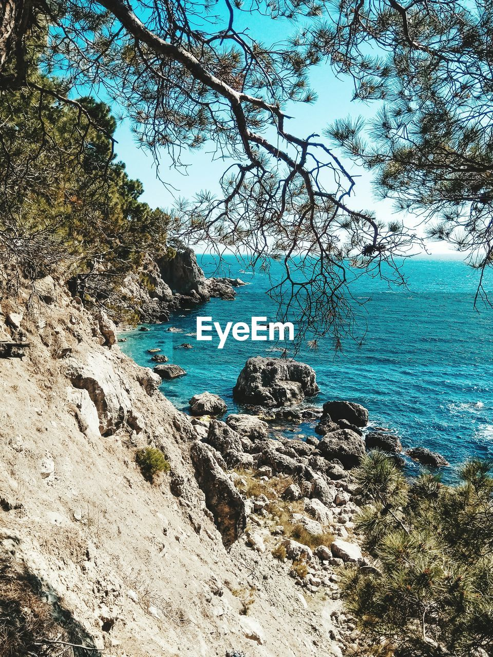 tree, plant, water, tranquility, rock, beauty in nature, nature, land, sea, sky, solid, tranquil scene, day, rock - object, scenics - nature, no people, outdoors, branch, non-urban scene, turquoise colored