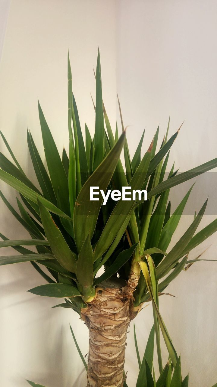 growth, plant, green color, leaf, no people, close-up, freshness, nature, day, indoors, flower
