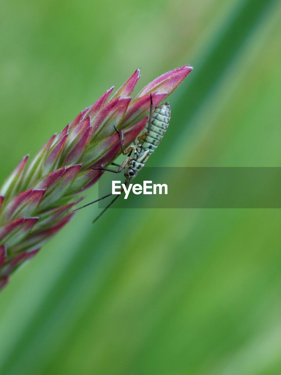 insect, invertebrate, animals in the wild, one animal, animal themes, animal wildlife, plant, close-up, animal, green color, day, nature, plant part, leaf, growth, no people, beauty in nature, focus on foreground, animal wing, outdoors, blade of grass