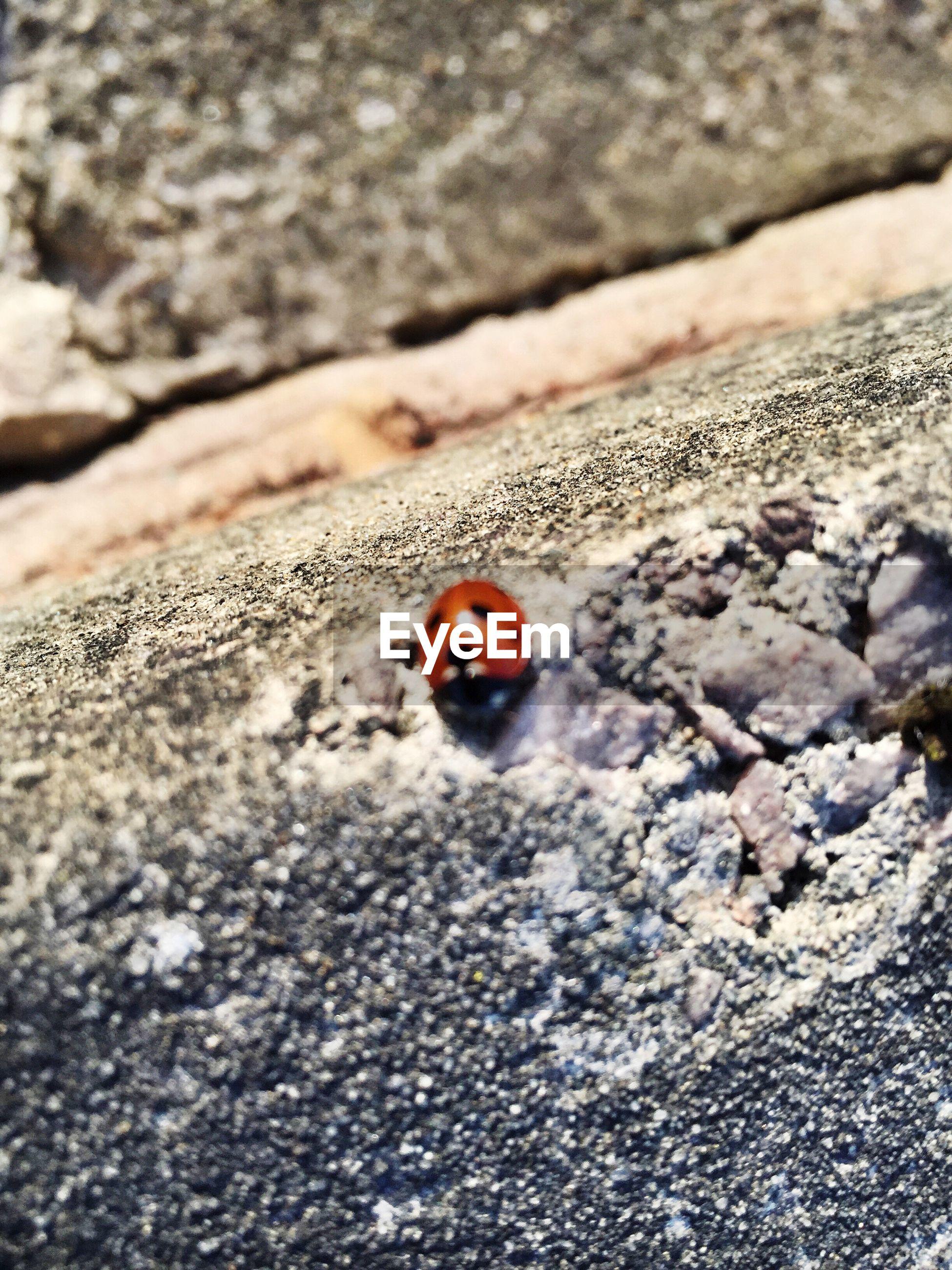 High angle view of ladybug on rock