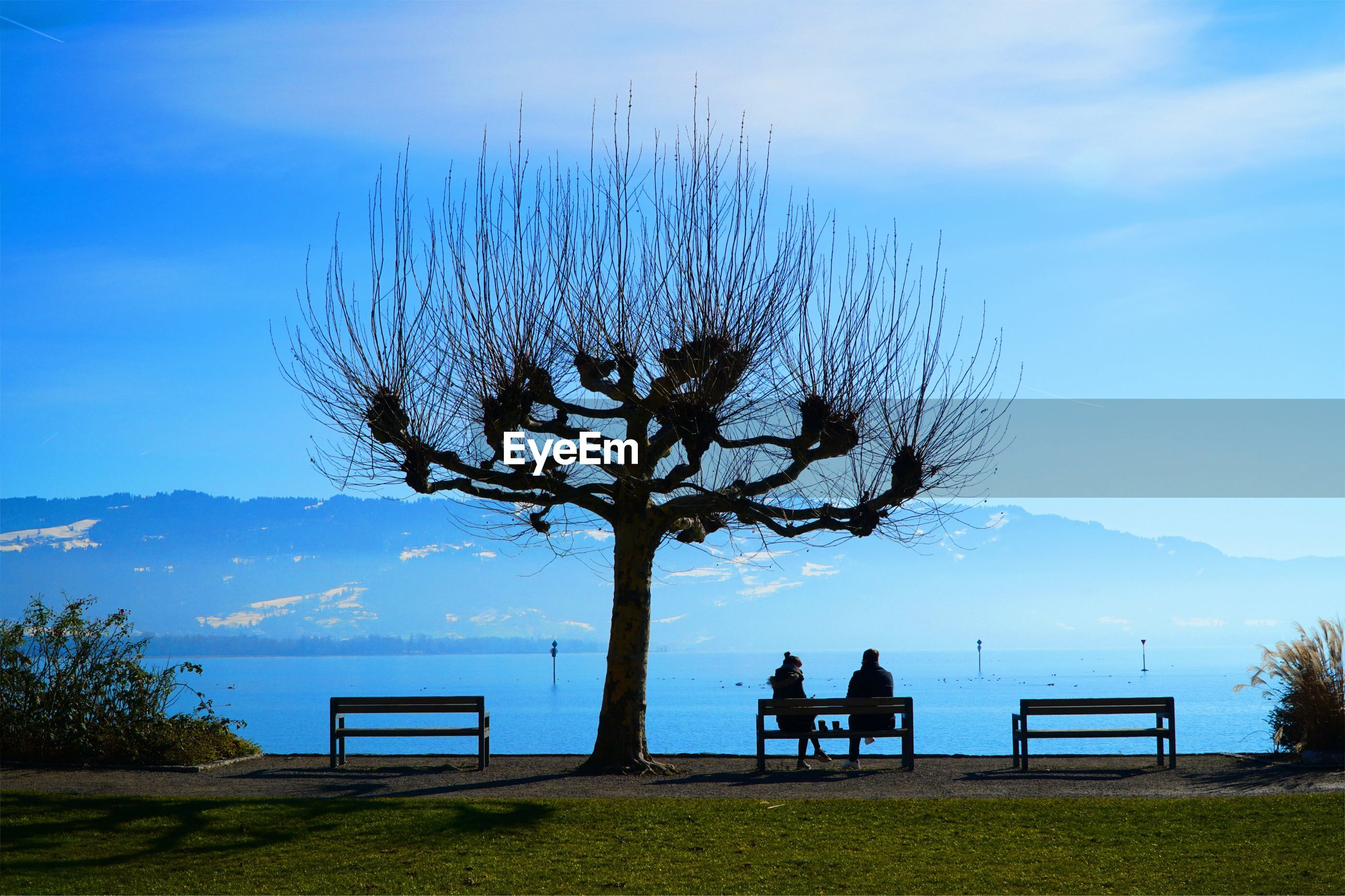 SILHOUETTE PEOPLE SITTING ON BENCH AGAINST PLANTS