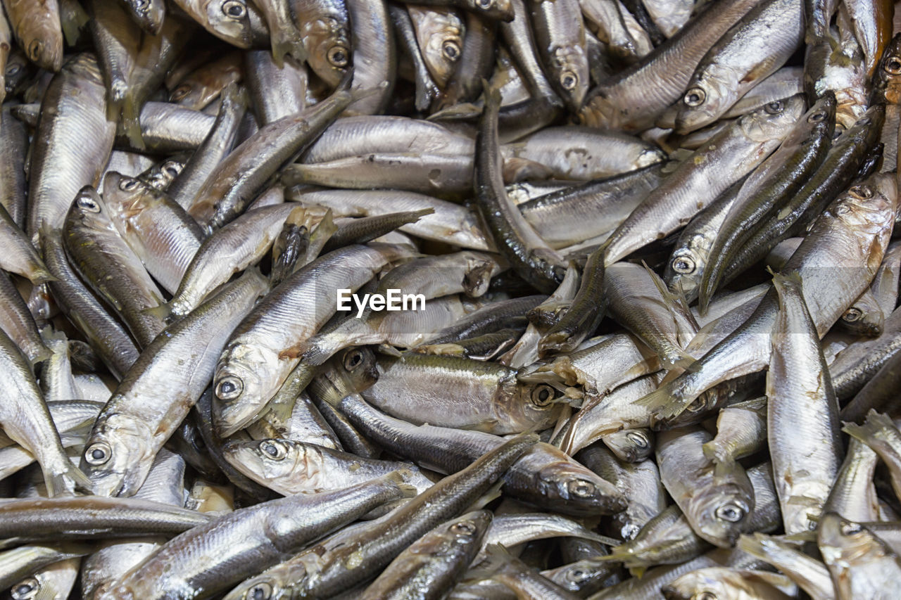 food and drink, seafood, food, freshness, fish, full frame, for sale, market, vertebrate, animal, no people, retail, backgrounds, raw food, abundance, wellbeing, large group of objects, day, healthy eating, high angle view, sale, fish market, retail display, fishing industry