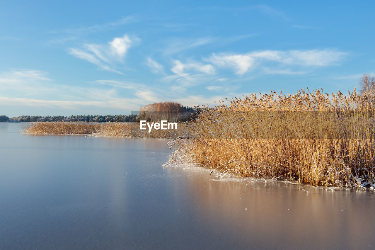 water, sky, cloud - sky, tranquil scene, tranquility, plant, nature, lake, scenics - nature, no people, tree, beauty in nature, reflection, day, non-urban scene, waterfront, land, outdoors, growth