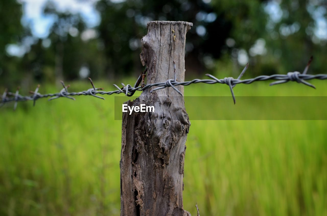 fence, boundary, barrier, protection, focus on foreground, barbed wire, wire, safety, security, wood - material, metal, no people, wooden post, post, day, land, nature, tree, field, close-up, outdoors