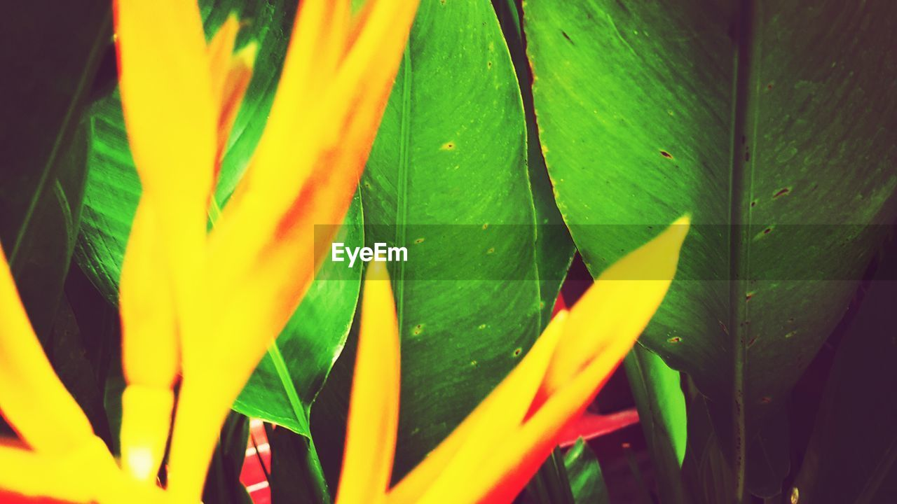 leaf, green color, growth, day, outdoors, multi colored, yellow, nature, close-up, no people, beauty in nature, freshness