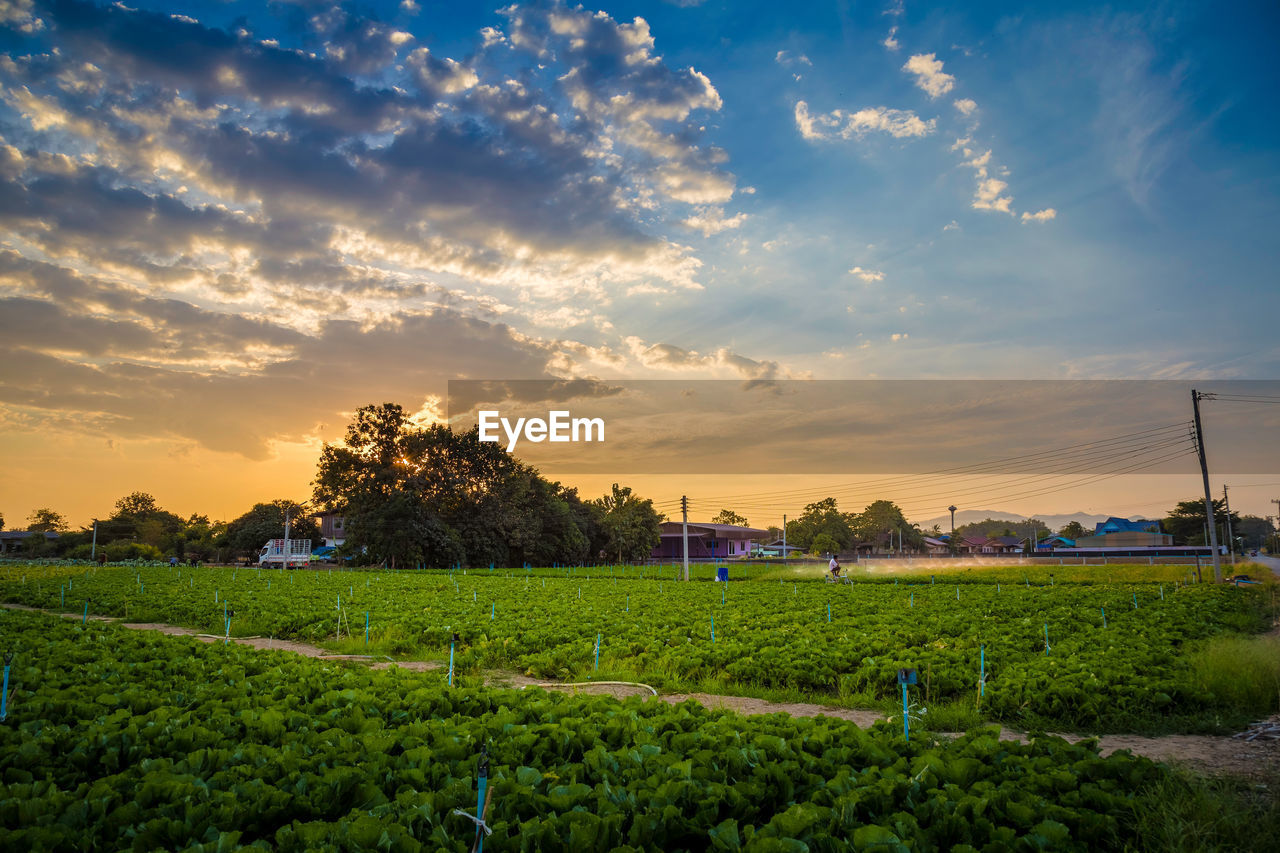sky, sunset, plant, beauty in nature, cloud - sky, field, scenics - nature, landscape, growth, land, agriculture, environment, rural scene, architecture, nature, tree, built structure, green color, tranquil scene, farm, no people, outdoors, plantation