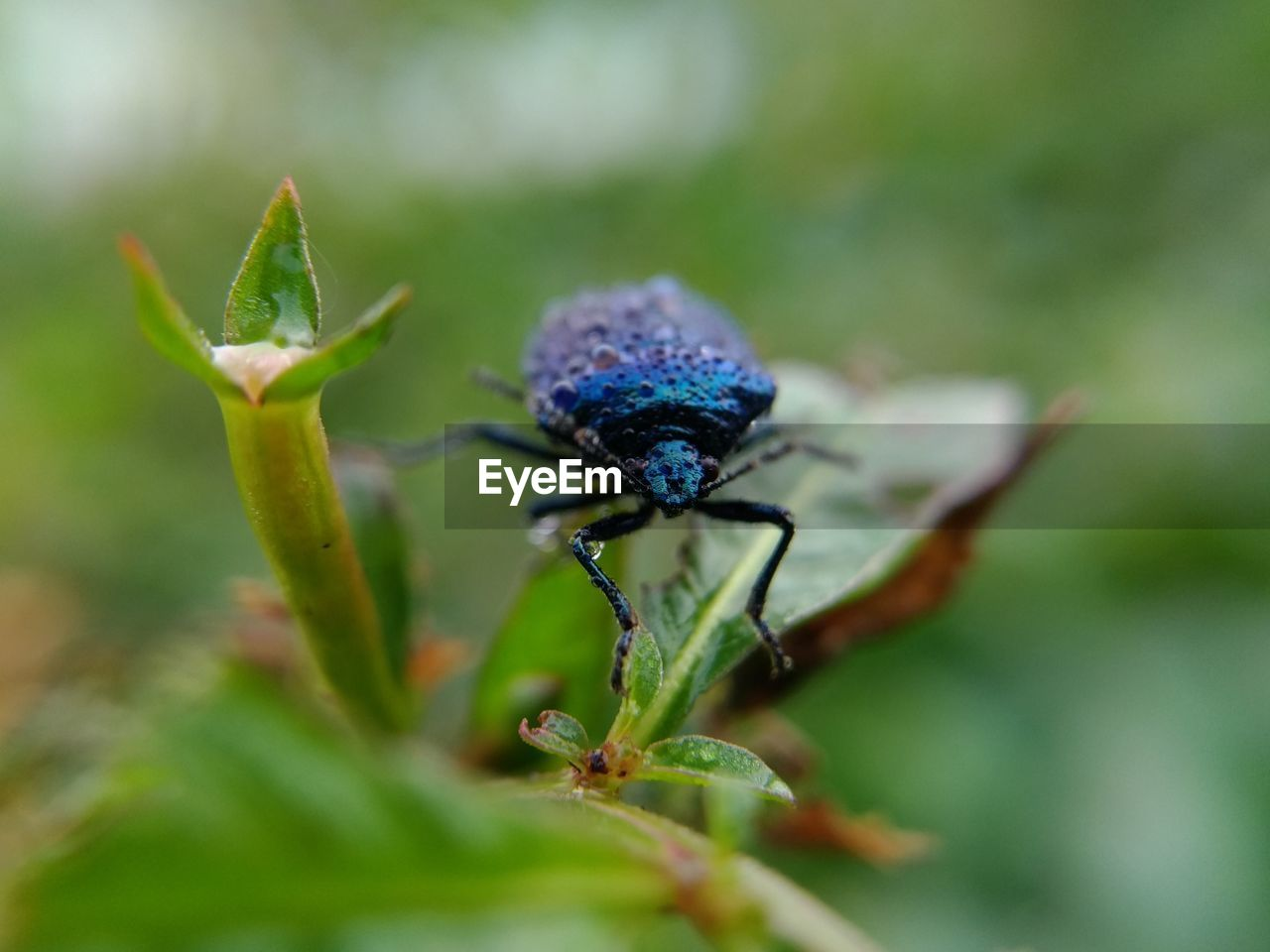 invertebrate, animal wildlife, insect, animal themes, animal, animals in the wild, close-up, one animal, selective focus, plant, plant part, green color, leaf, day, nature, no people, growth, zoology, beetle, beauty in nature, animal eye