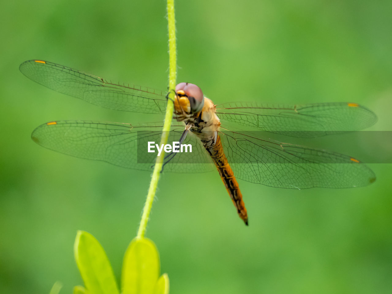 invertebrate, insect, animal wildlife, animal themes, animals in the wild, animal, one animal, close-up, green color, plant, animal wing, nature, plant part, leaf, focus on foreground, day, growth, dragonfly, no people, beauty in nature, outdoors, animal eye