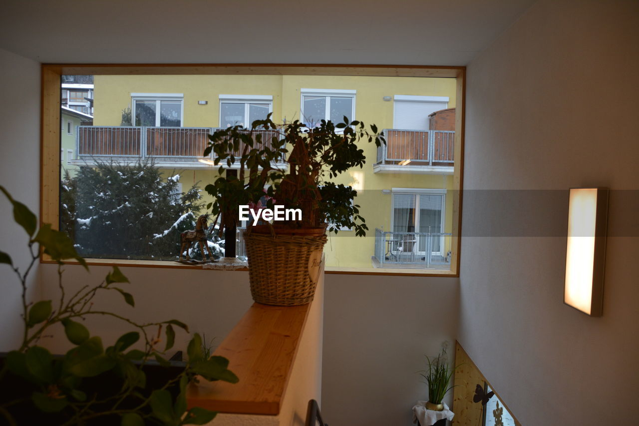 plant, indoors, home interior, potted plant, window, no people, nature, flower, flowering plant, domestic room, day, growth, glass - material, decoration, transparent, architecture, home, wall - building feature, vase, houseplant, flower arrangement