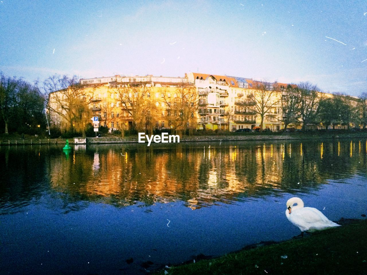 water, reflection, architecture, bird, animals in the wild, nature, tree, lake, animal themes, building exterior, built structure, one animal, outdoors, no people, day, sky, beauty in nature, swan, swimming