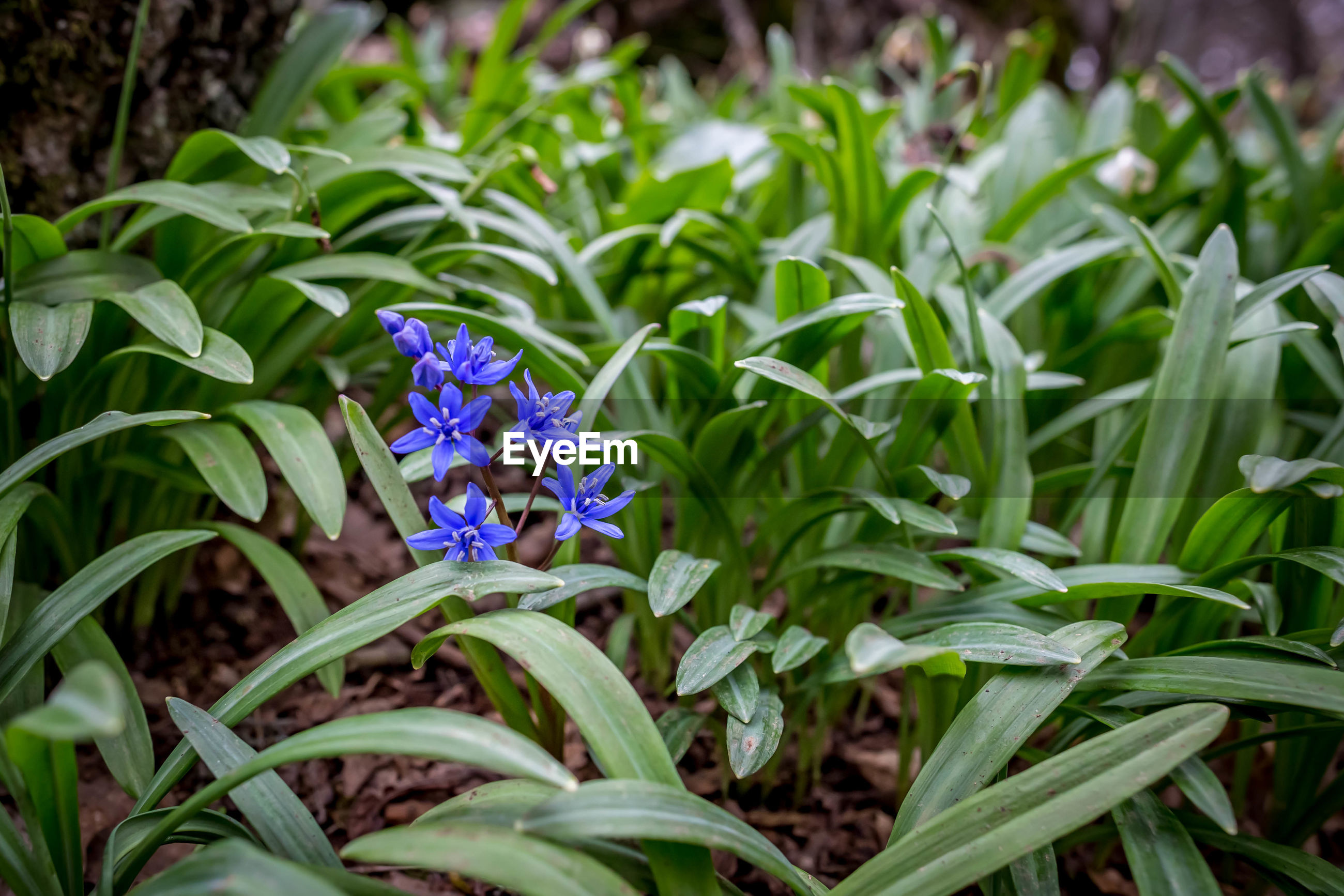 flowering plant, flower, plant, beauty in nature, freshness, fragility, growth, vulnerability, petal, flower head, close-up, purple, inflorescence, plant part, leaf, nature, green color, no people, botany, day, springtime