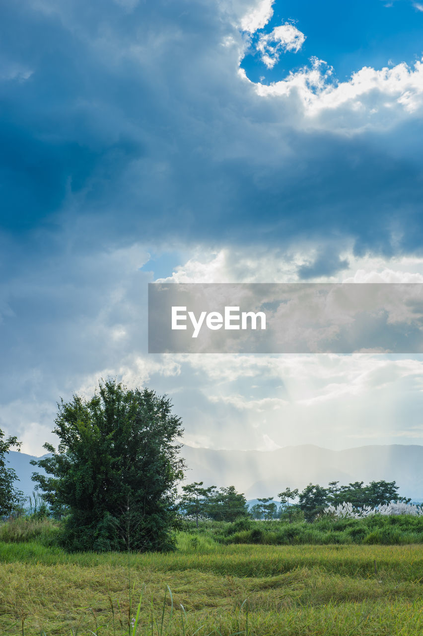 cloud - sky, sky, nature, field, tree, tranquility, landscape, beauty in nature, scenics, tranquil scene, growth, no people, day, agriculture, outdoors, grass, rural scene