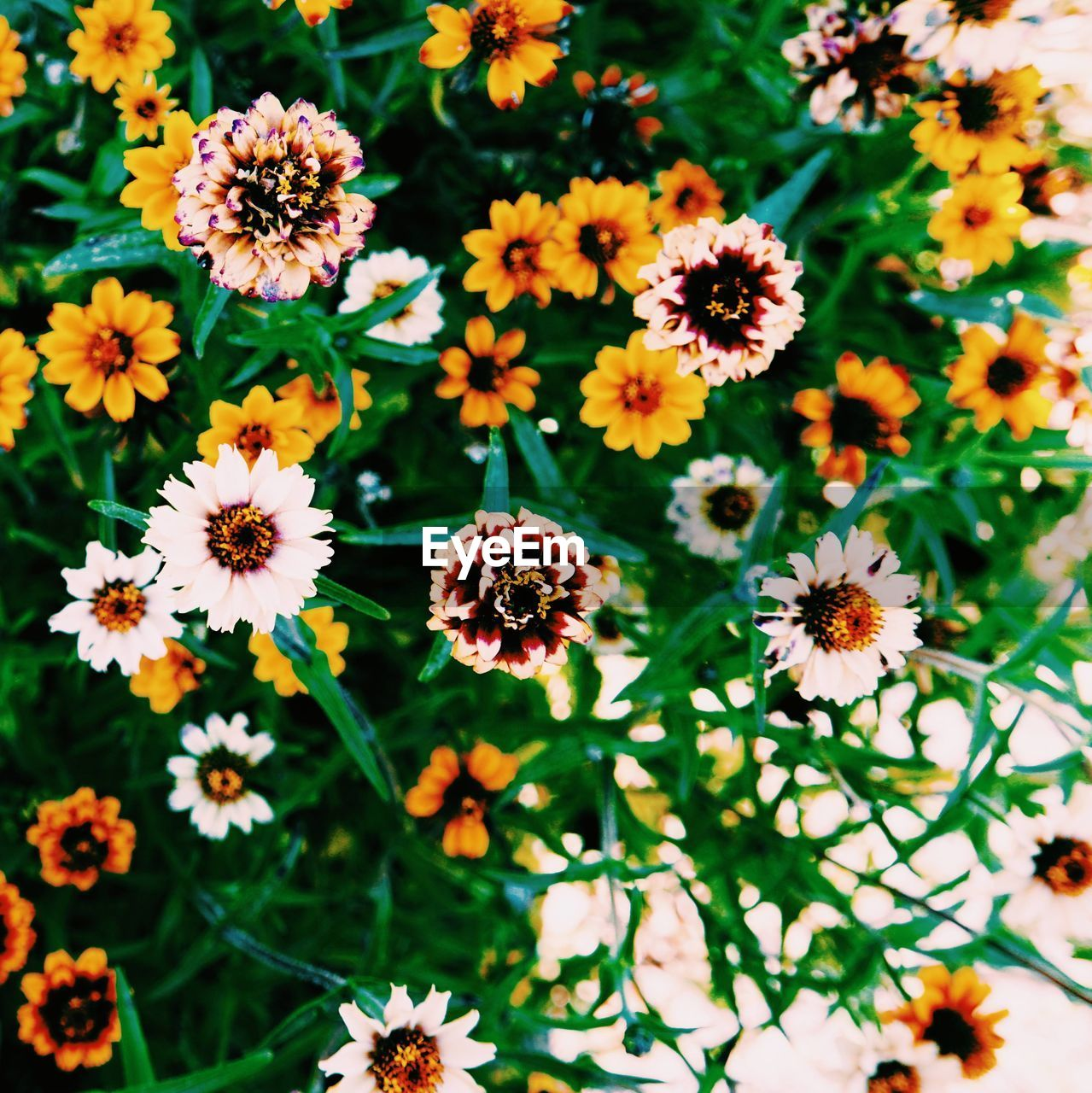 flowering plant, flower, fragility, vulnerability, freshness, plant, beauty in nature, growth, flower head, petal, inflorescence, close-up, nature, no people, high angle view, day, focus on foreground, outdoors, field, land, pollen