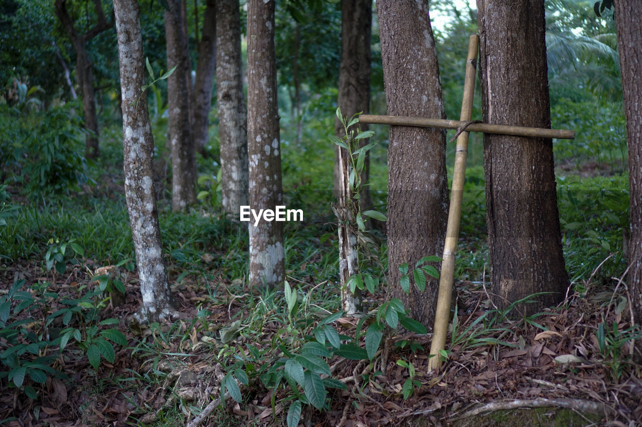 tree, forest, plant, land, tree trunk, trunk, woodland, nature, growth, day, no people, tranquility, outdoors, plant part, green color, non-urban scene, focus on foreground, wood - material, leaf, scenics - nature, bamboo - plant