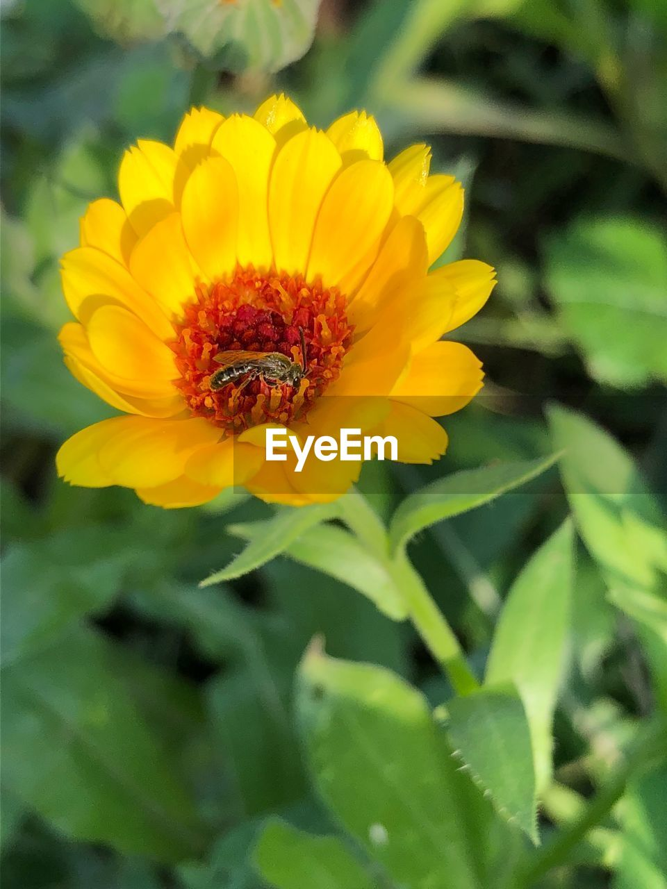 flowering plant, flower, beauty in nature, invertebrate, one animal, growth, animal, animals in the wild, animal themes, insect, plant, animal wildlife, freshness, fragility, bee, yellow, close-up, vulnerability, petal, flower head, no people, pollination, outdoors, pollen