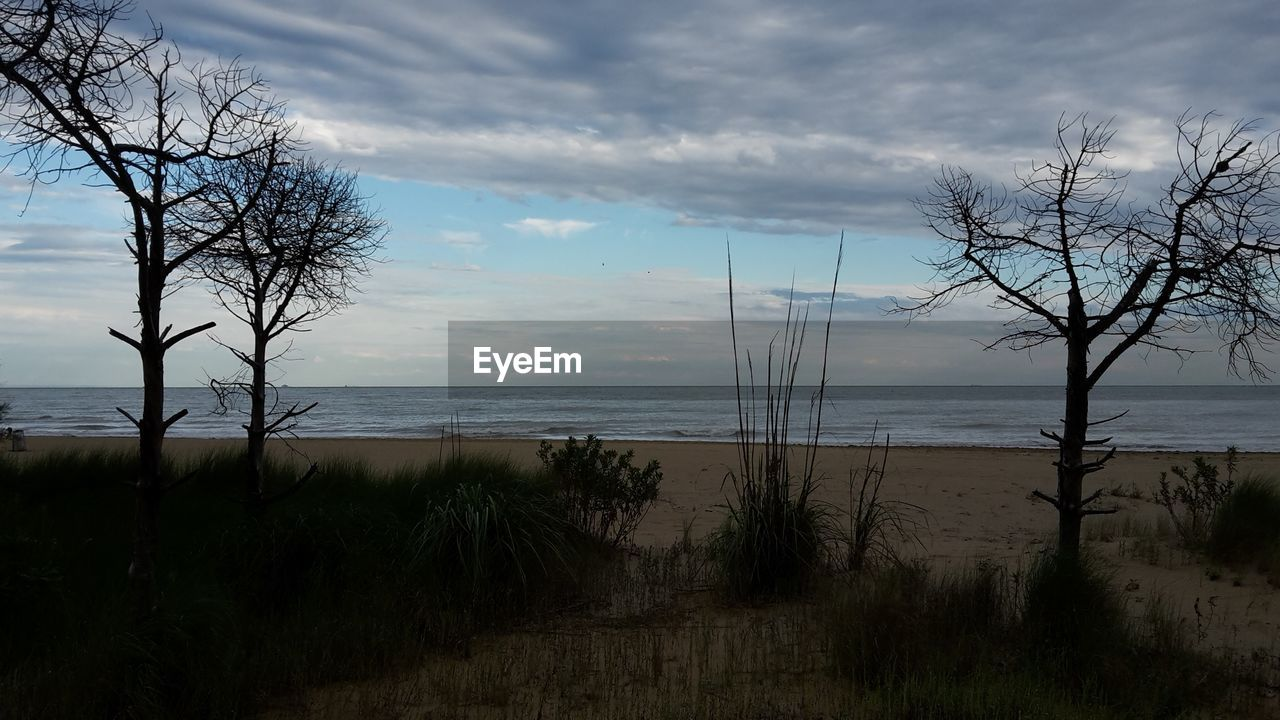 sky, water, cloud - sky, scenics - nature, beauty in nature, tranquility, tree, plant, tranquil scene, sea, land, nature, beach, no people, bare tree, horizon over water, non-urban scene, growth, horizon, outdoors, marram grass
