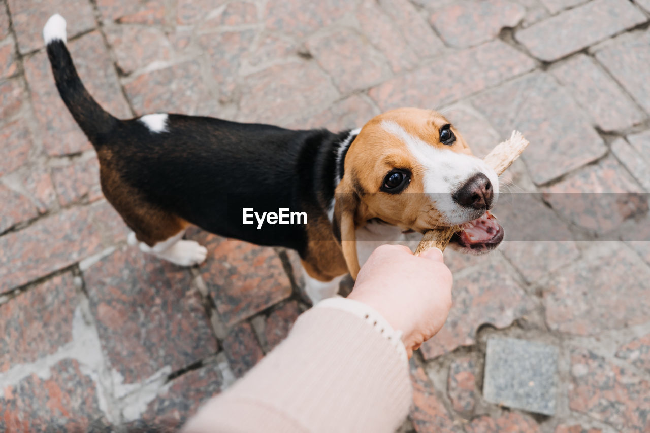 HIGH ANGLE VIEW OF DOG WITH HAND ON FOOTPATH