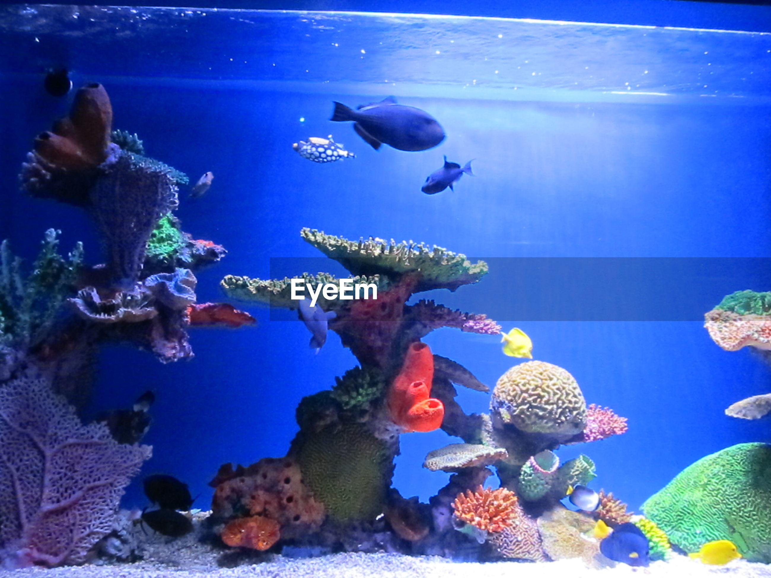 underwater, sea life, animal themes, fish, swimming, sea, blue, undersea, animals in the wild, wildlife, water, aquarium, indoors, coral, school of fish, togetherness, animals in captivity, nature, transparent