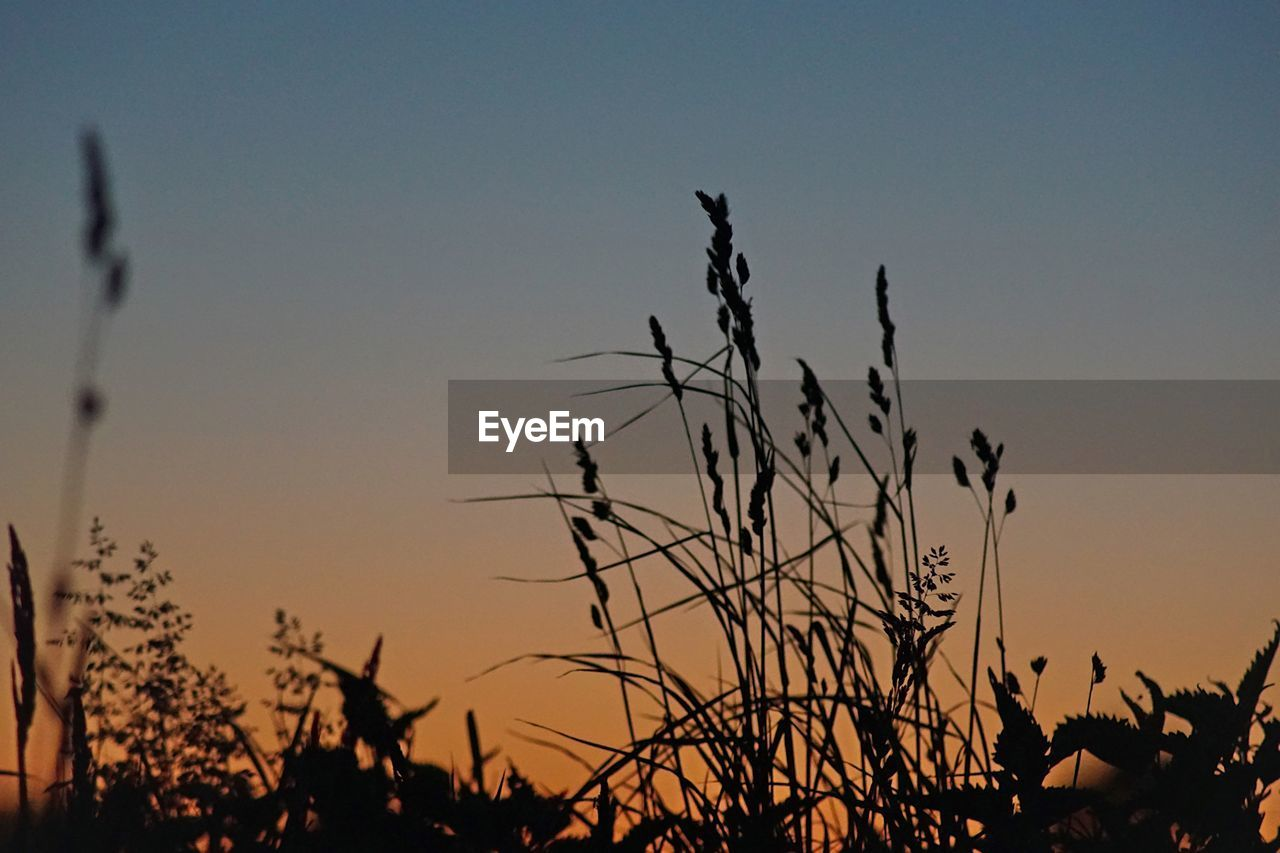 sky, sunset, silhouette, plant, beauty in nature, growth, tranquility, nature, no people, scenics - nature, tranquil scene, orange color, clear sky, non-urban scene, focus on foreground, outdoors, close-up, low angle view, plant stem, copy space, timothy grass, stalk