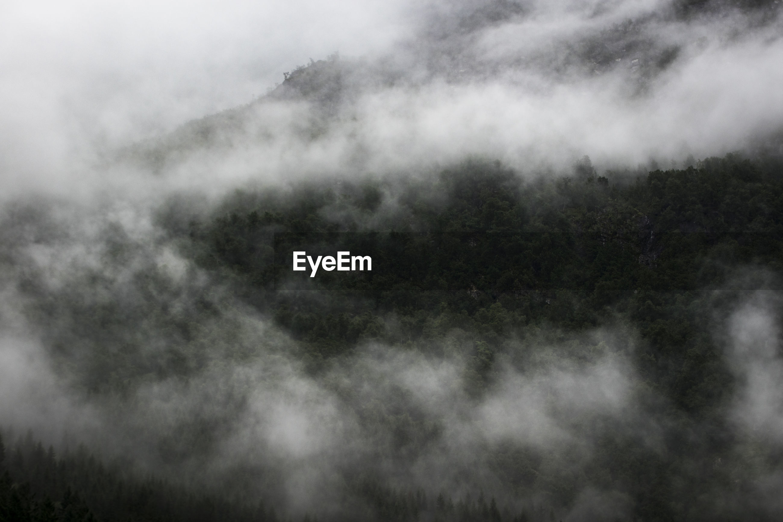 SCENIC VIEW OF FOG