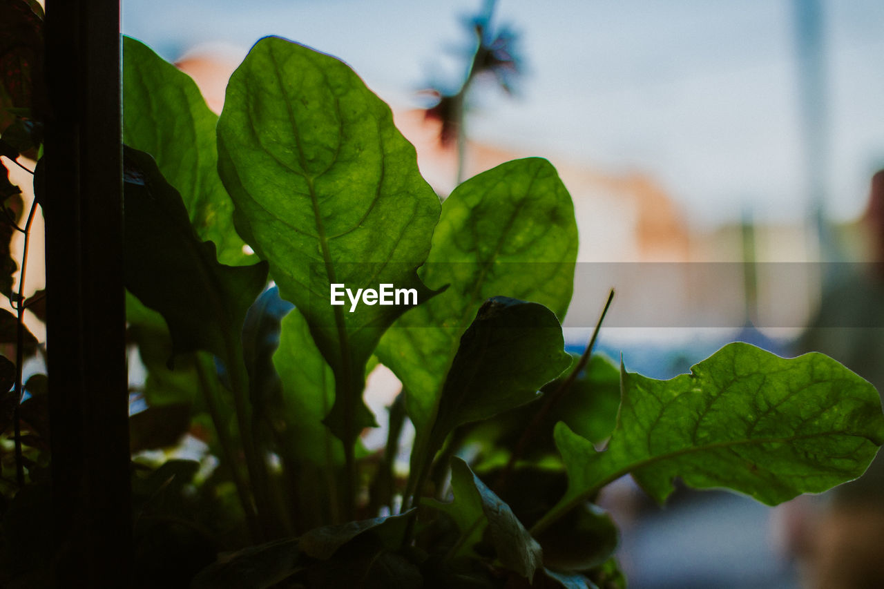 plant part, leaf, plant, green color, close-up, focus on foreground, growth, nature, day, beauty in nature, no people, one animal, animals in the wild, animal, animal wildlife, outdoors, selective focus, animal themes, invertebrate, freshness, leaves