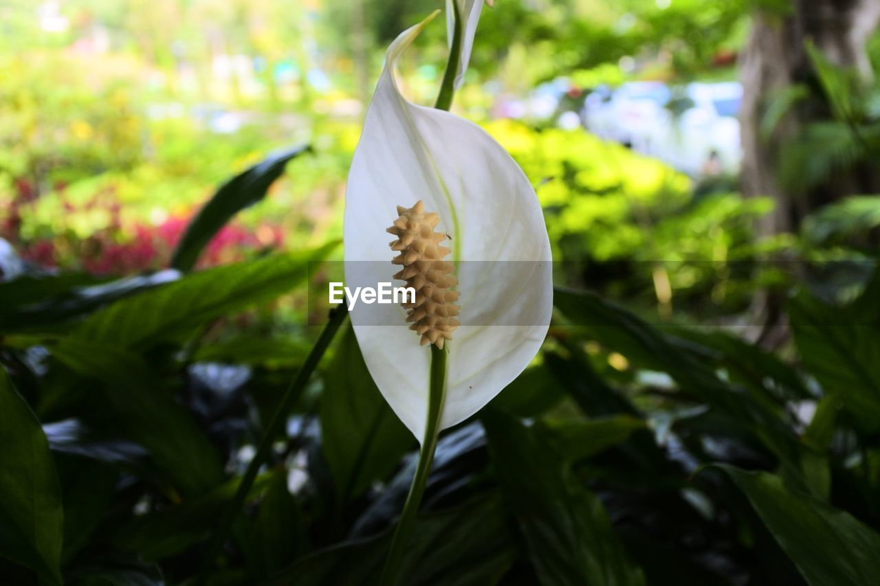 flower, petal, growth, nature, beauty in nature, fragility, freshness, leaf, flower head, plant, close-up, day, no people, outdoors, blooming